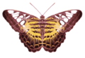 Parthenos sylvia icon.png