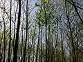 Petit bosquet au printemps à Grez-Doiceau 002.jpg