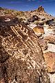 Petroglyphs (19356006353).jpg