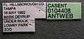 Pheidole megacephala casent0104408 label 1.jpg