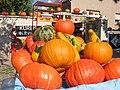 Philippsthal 7 pumpkin.JPG