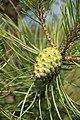 Photographed at Misisquoi National Wildlife Refuge. (9253895155).jpg