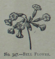 Picture Natural History - No 347 - Bell Flower.png