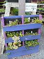 Pierson's Raised Bed from Pallet6.JPG
