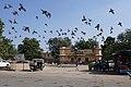 Pigeons à Jaipur (1).jpg