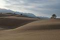 PikiWiki Israel 31121 Samar Dunes.jpg