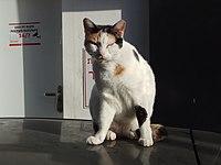 PikiWiki Israel 53309 a cat in the tel aviv port.jpg