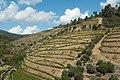 Pinhão-Vinhas em montanha abrupta-20140913.jpg