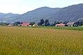 Poggersdorf Annamischl 15062007 01.jpg