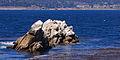 Point Lobos September 2012 006.jpg