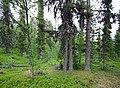 Porjus Sweden - panoramio.jpg