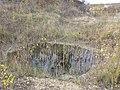 Potamogeton nodosus sl81.jpg