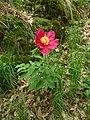 Průhonice, zámecký park, květina.JPG