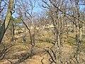 Prague Kunraticky Creek Slope3.jpg