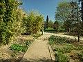 Praha, Troja, Botanická zahrada, cesta a bambus.JPG