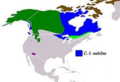 Present distribution of the gray wolf subspecies - Great Plains wolf (Canis lupus nubilus).jpg