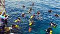 Primeiro curso mergulho.jpg