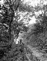 Promenade en famille dans les bois, Allemagne (6820309826).jpg