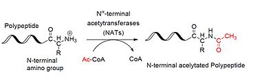 Acetylation - Wikipedia