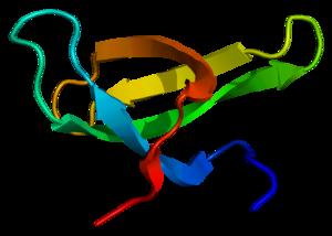 Survival of motor neuron - Image: Protein SMN1 PDB 1g 5v