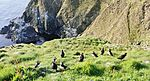 Puffin Party IMG 3348 (19674441423).jpg