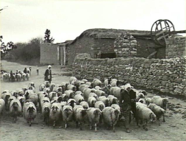 Qastina12
