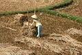 Quang Ngai farmer.jpg