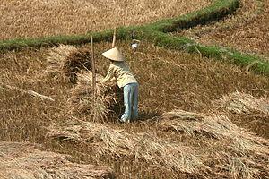Quảng Ngãi Province - Farmer in Quảng Ngãi province