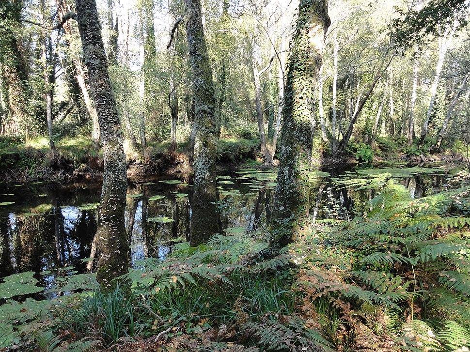 Río Ladra cerca de Baamonde (Lugo, Galicia, España) 02