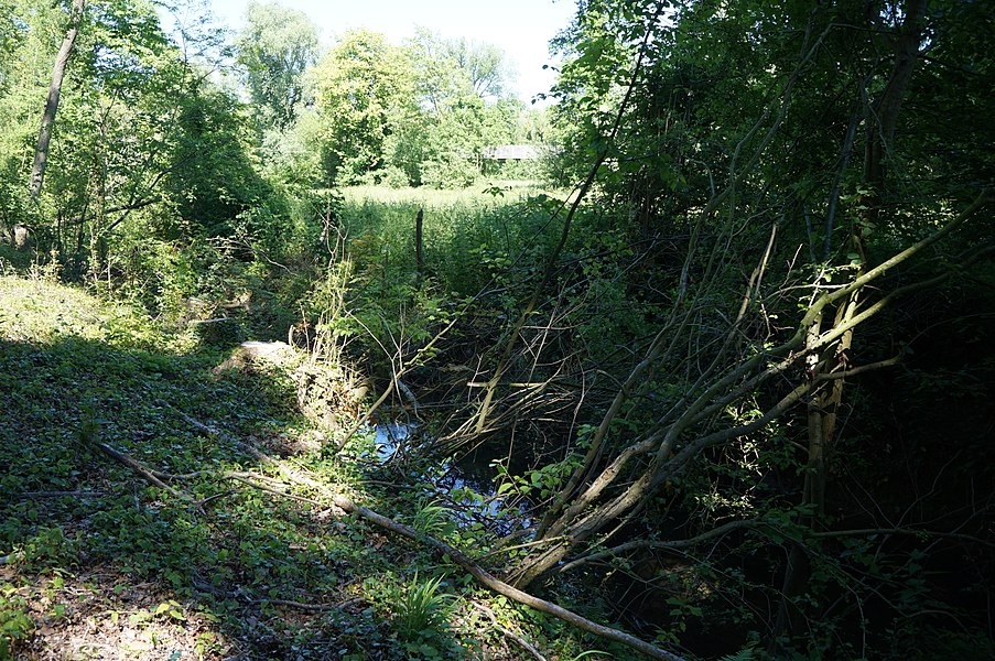 Dans la réserve naturelle régionale de l'Escaut-rivière entre Proville et Cantaing-sur-Escaut