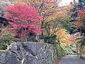 "Red leaves in front of ""Auberge Kaedenoki"" in Shin-Yabakei Valley.JPG"