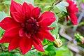 Red natural flower.jpg