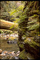 Redwood National Park REDW9367.jpg