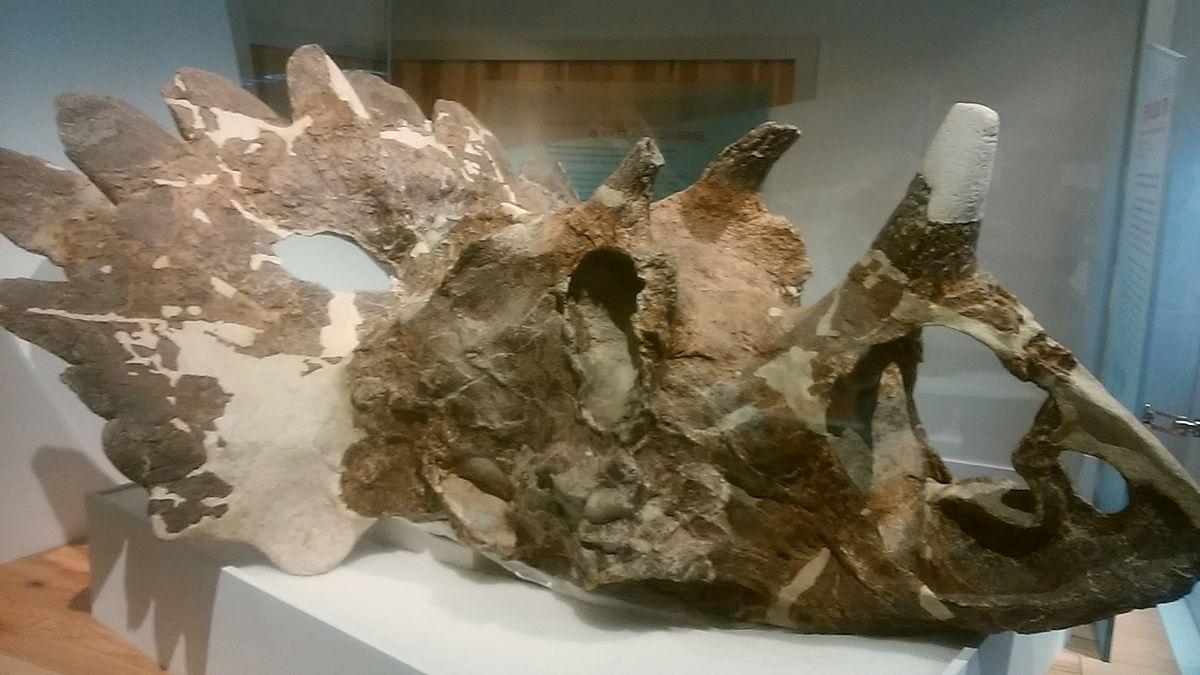 Regaliceratops - Wikipedia