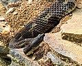 Resident Wildlife (2) (14700081844).jpg