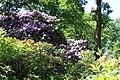 Rhododendronpark Bremen 20090513 071.JPG