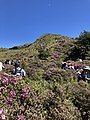Rhododendrons and Mountaineers.jpg