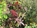 Ricinus communis and friends (8079146812).jpg