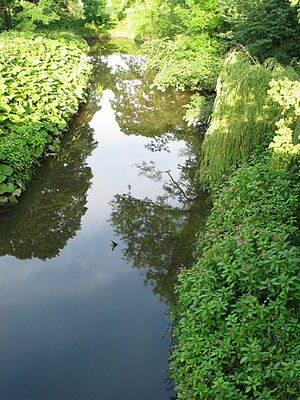 River Browney - The River Browney at Sunderland Bridge, shortly before its confluence with the River Wear. Scented Himalayan Balsam has invaded the right riverbank, giving the site a sweet, floral smell.