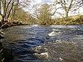 River Derwent - geograph.org.uk - 718963.jpg
