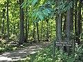 Route forestière de la Fontaine des Fièvres (Forêt de Montmorency) - panoramio.jpg