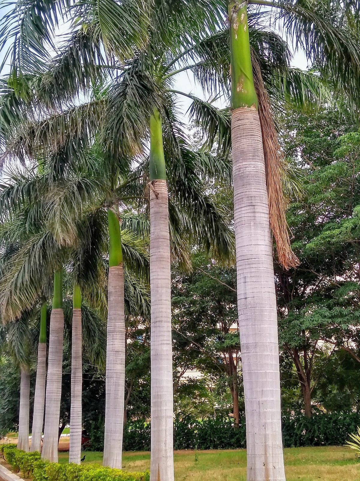 Sabal Palm House West Palm Beach