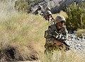 Royal Marines in the Mojave Desert During Exercise Black Alligator MOD 45156249.jpg