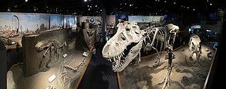 Royal Tyrrell Museum of Palaeontology - Dinosaur Hall is the large display area featuring specimens of an Albertosaurus, Stegosaurus, Triceratops, and a Tyrannosaurus.