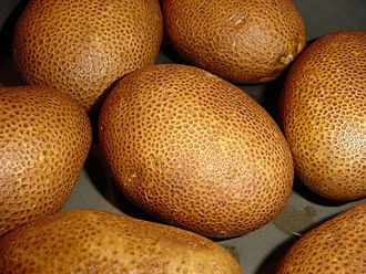 Russet Burbank - Image: Russet potato