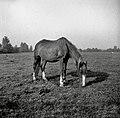 S paše po gnojnskem svetu, roje pri Šentjerneju 1952 (4).jpg