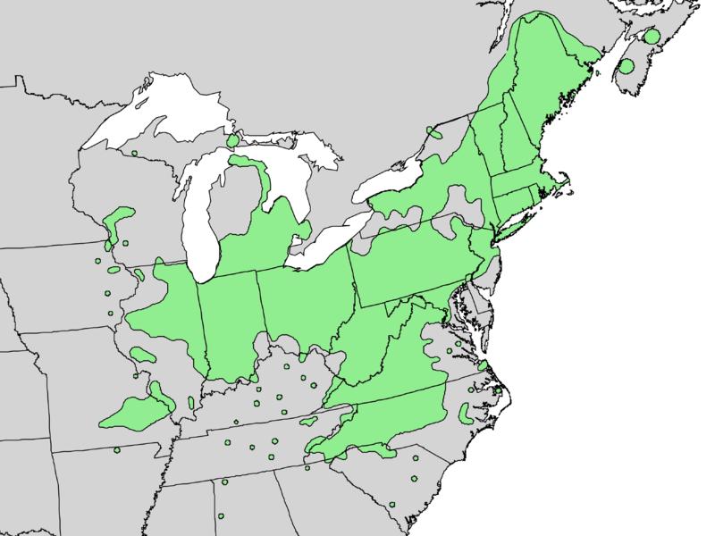 File:Salix sericea range map 3.png