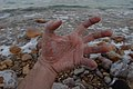 Salty hand at the Dead Sea (2008-01).jpg