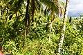 Samaná Province, Dominican Republic - panoramio (98).jpg