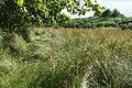 Sampford Courtenay, path to Alfordon Manor - geograph.org.uk - 207629.jpg
